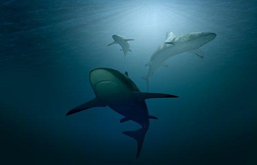 海鮮汞含量的相關研究,主要有關普遍的大型魚類,如箭魚、鯊魚、馬頭魚,鯖魚及大目鮪(短鮪)。(取自pixabay)